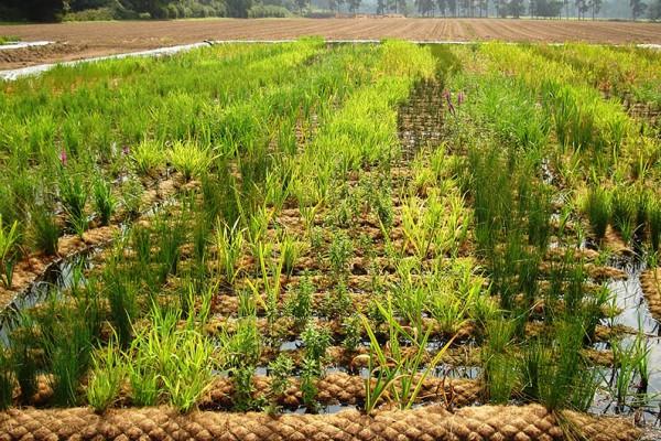 Erosion control Coir matting