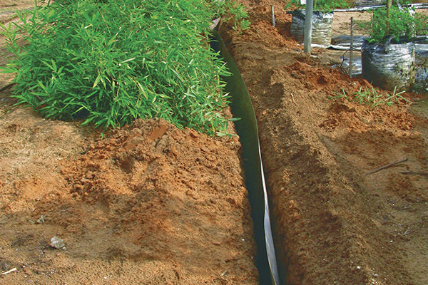 root barrier installed in soil to prevent invasive weed species